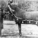 New 5x7 Photo: President Abraham Lincoln's Horse, Old Robin
