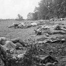 New 5x7 Civil War Photo: Dead at Rose Woods, Gettysburg