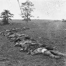 New 5x7 Civil War Photo: Rebel Dead on Battlefield of Antietam - Sharpsburg