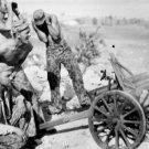 New 5x7 World War II Photo: Captured Japanese Gun by Marines in Saipan