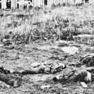 New 5x7 Civil War Photo: Dead Soldiers on the Antietam - Sharpsburg Battlefield