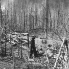 New 5x7 Civil War Photo: Shelled Trees on the Wilderness Battlefield, 1864