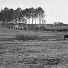 New 5x7 Civil War Photo: Horses at Col. Sharpe's Headquarters, Brandy Station