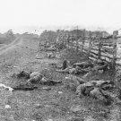 New 5x7 Civil War Photo: Rebel Dead on Hagerstown Road, Antietam - Sharpsburg