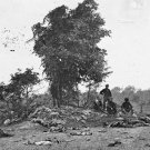 New 5x7 Civil War Photo: Dead on Miller Farm, Battle of Antietam - Sharpsburg