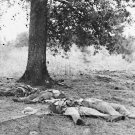 New 5x7 Civil War Photo: Artillery Fire Dead Near Little Round Top, Gettysburg