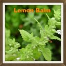 100 Organic Lemon Balm Melissa Officinalis Heirloom Seeds ~ Make Medicinal Teas