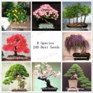 220 DIY Home Garden Bonsai Tree Seeds 8 kinds