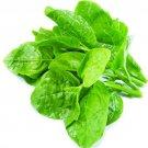Green Malabar Spinach  Seeds
