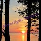 Beach Sunset #1