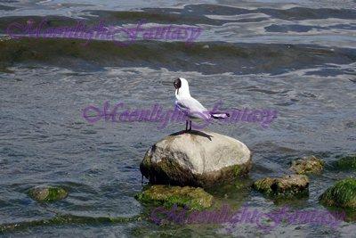 Seagull #2