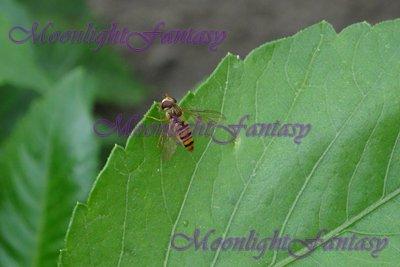 On a leaf #1