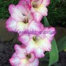 Gladiolus #1