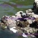 Turtles #2