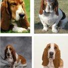 Lot Of 12 Bassett Hound Dog Fabric Panel Quilt Squares