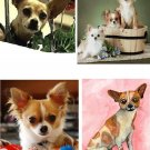 Lot Of 4 Chihuahua Dog Fabric Panel Quilt Squares