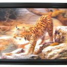 Bobcat 3-D picture REDUCED - SWIWG    0126-3D2893
