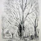 André Dunoyer de Segonzac - L'arbre -Original Etching - 1924