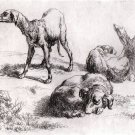 Nicholas Berchem - Animalia - Three Dogs at Rest - Etching