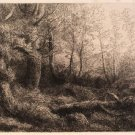 Legros - A Woodland Study - 1903 original etching in dry point