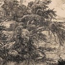 Jacob van Ruisdael -The Great Beech - Etching