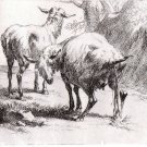 Nicholas Berchem-Animalia - Two Cows  - Etching