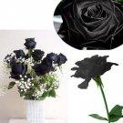 20 Black Rose Flower Rose2 Seeds