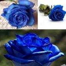 50 Pcs Blue Rose Seeds DIY Home Garden Dec