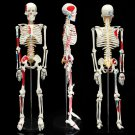 85cm PVC Anatomical Human Skull Skeleton Anatomy Model With Stand Medical Teaching Tool