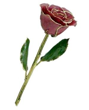 Rose-24Kt Gold-Fuscia