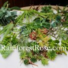 100 Succulent cuttings 30 unique varieties vertical wall wreath succulents plant