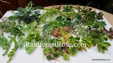 100 Succulent cuttings 30 unique varieties vertical wall wreath succulents plant