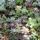 20 Assorted succulents 2 inch pots mini plants FREE SHIP wedding favors