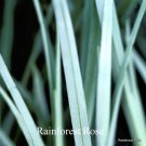 Carex glauca Blue Zinger (38) ornamental grasses Zone 4-9