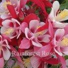 Aquilegia caerulea Origami Red-White 72 plants wholesale Columbine Zone 3-8