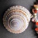 Yellow & Orange Jasper necklace with Sea Shell Pendant