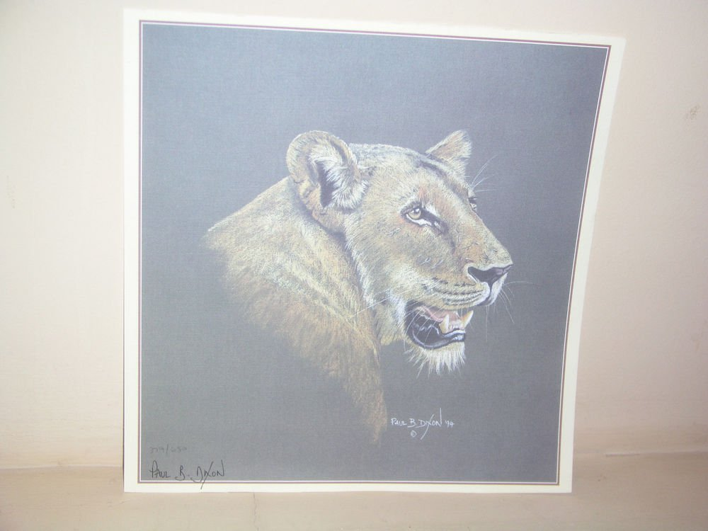 SOUTH AFRICAN ARTIST PAUL B. DIXON SIGNED AND NUMBER FEMALE LION PRINT