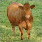 LIMOUSIN COW #1 CROSS STITCH PATTERN PDF ONLY