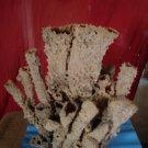 Sea made Sponge tubes