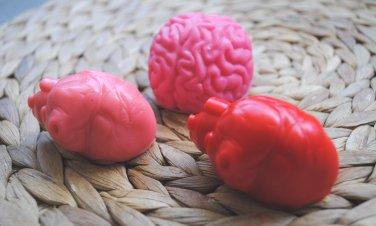 Soap Handmade Brain & Heart Soap � Birthday present, party filler, fun bathtime, novelty