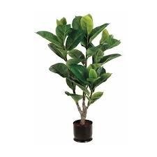 4 foot leaf tree