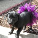 Dog Festive Tutu - Full Skirt