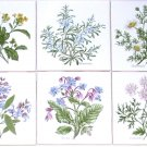 "Herb Ceramic Tile  4.25"" Sage Borage Rosemary Mustard Chamomile Coriander Flower"