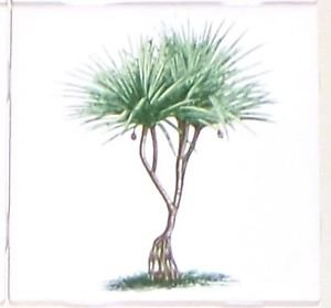"Tropical Green Palm Trees Ceramic Tile 4.25"" x 4.25"" Kiln Fired Decor #1"
