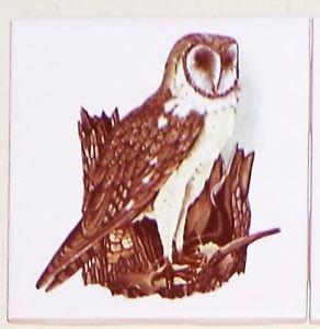 "Owl #1 Bird Ceramic Accent Tile 4.25"" Kiln Fired Decor Wild Life"