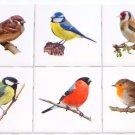 "Bird Ceramic Tile Assortment 4.25"" x 4.25"" Song Bird Collection Kiln Fired Decor"