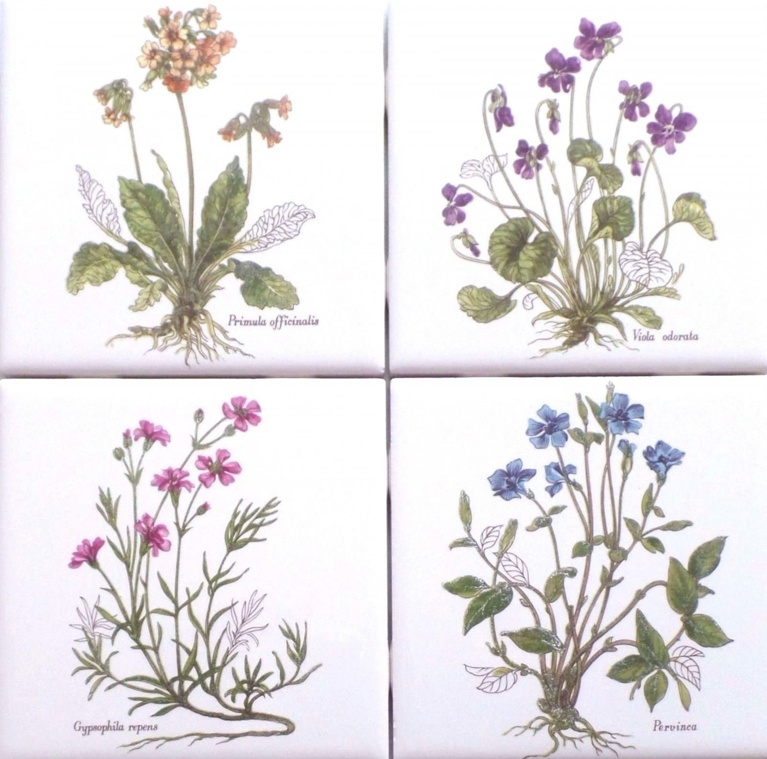 "Herb Ceramic Tile 4.25"" x 4.25"" Primula Officianalis set of 4 Flower Kiln fired"