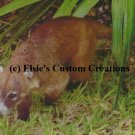 Mexican Coati - PDF Cross Stitch Pattern