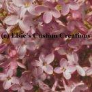 Elsie's Lilacs 4 - PDF Cross Stitch Pattern