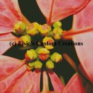 Poinsettia Flowers 7 - PDF Cross Stitch Pattern